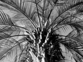 Palm Fronds in Black and White by roamingtigress
