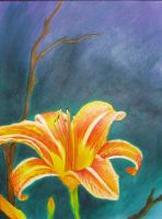 Tiger Lily Study 1 by kimberly-castello