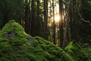 Light and mossy mountains by hopelesslyignorant