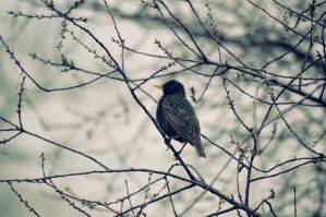 hello little bird by kasiuse