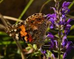 A Butterfly at the Library by Artlune