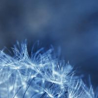 cold by Megson