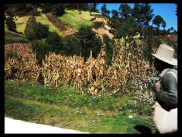 Campesino by blizzy123
