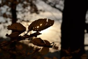 Autumn Sunset and Leaves by adamwita