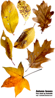Stock Photo - Autumn Leaves by Cocktaille