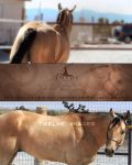 Stained Gold - Equine II by Anidi