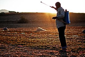 Farmer Disinfects Grapes by dincturk