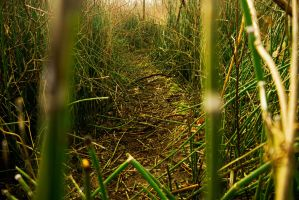 RiverReeds3 by CityWavePhotography