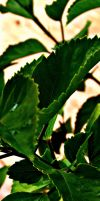 Green Leaves 3 by my-dog-corky
