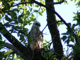 Fledgling by grlgeorge