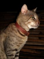mOmoy the cAt by nikolaihoe27