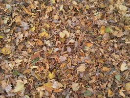 Autumn Leafs 01 by Fea-Fanuilos-Stock