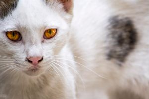Yellow Eyes by Sadeq-Photography