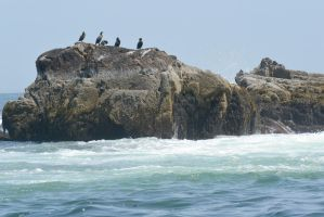 On the Rocks, Cormorants by Miss-Tbones