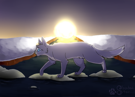 Back to Thunderclan by shadowily