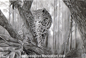 Leopard in the jungle by CarlooSolrac