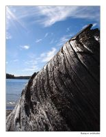Driftwood 02 - Red Pine Lake by fragilemuse-org