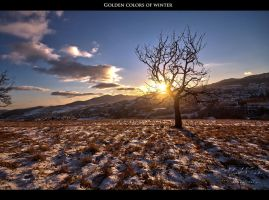 Golden colors of winter by Gautama-Siddharta