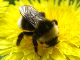Bumble (Bee) Two by decors