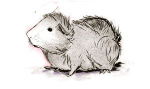 Guinea Pig No. 4 by TuckedAway