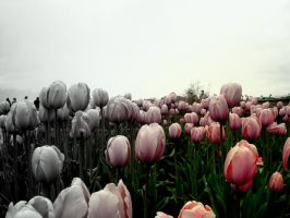 Cloudy Tulips by Zilch17