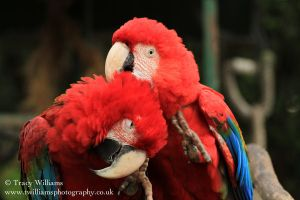 Pair Of Parrots by twilliamsphotography