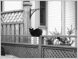 A Black, and White, Cat by zoharb