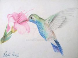 Hummingbird by Sawakura
