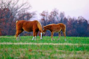 Mama and Baby Red by sweetz76