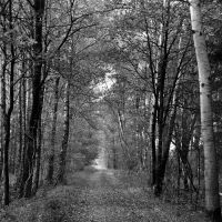 forest by augenweide