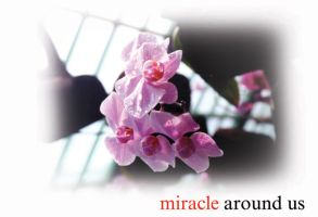 miracle around us 03. by kevinandy