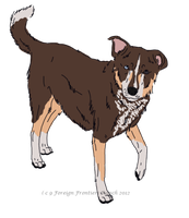 Pyrenean mountain/Cattle dog - Custom by ForeignFrontierRanch