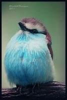 Racket-tailed roller by mariquasunbird1