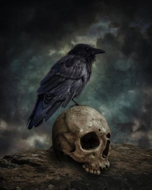 The Crow And The Skull.. by AledJonesStockNArt