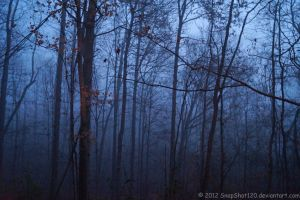 Fog-Filled Forest (Color Version) by SnapShot120