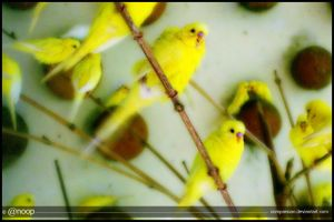 Yellow Birds by comparsian