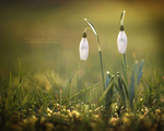 Spring on its Way. by OliviaMichalski