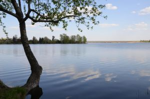 Stock: Pond/Tree by Think-Outside-Of-Box