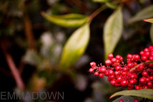 Red Berries Delight by oEmmanuele