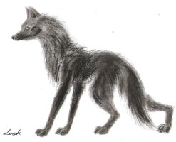 Charcoal Wolf by Vampire-At-Heart