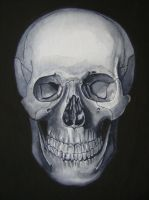 Skull Study by ArtbyTheGoddess