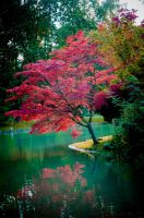 Red tree by lalylaura
