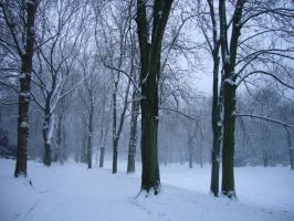 Park in Winter by serel