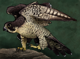Peregrine Falcon by painted-flamingo