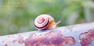 Snail by laSuperMeow