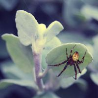 Spider. by dosske