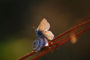 My friend, the snail by Samantha-meglioli