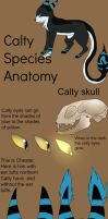 Calty species anatomy refrence by TheBlazingEmber