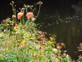 River and flowers by Hagrid-on-crack