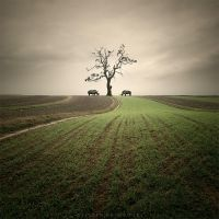 Between by Alshain4